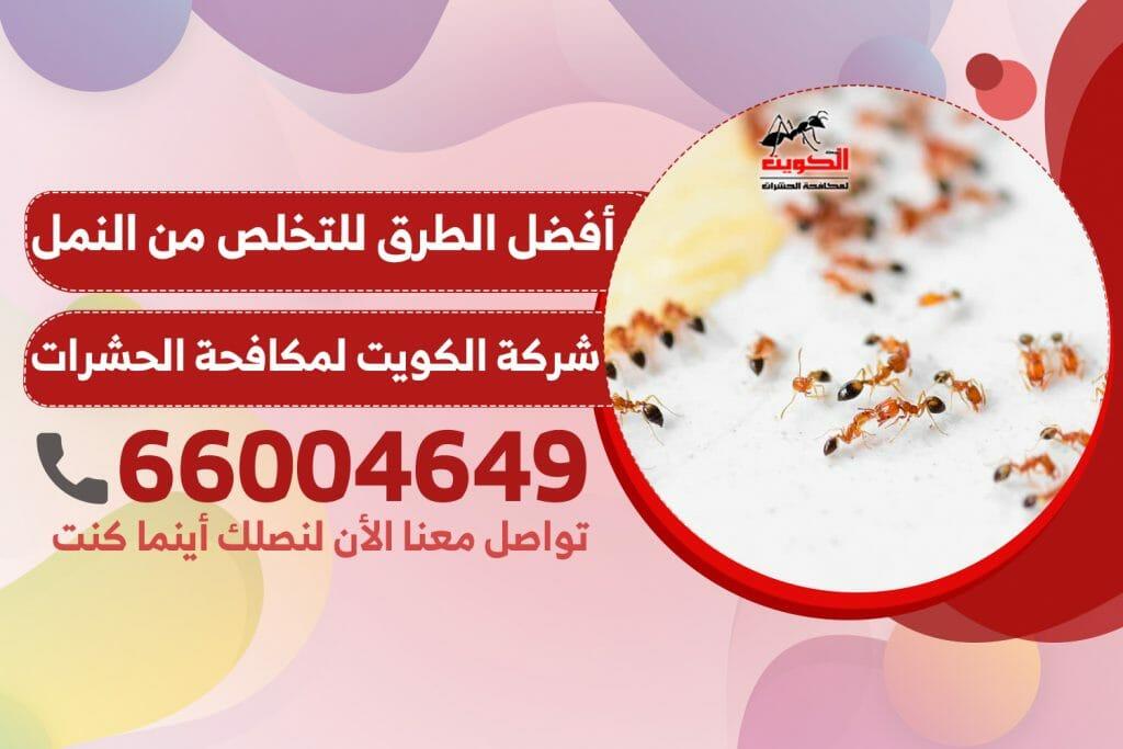 طريقة التخلص من النمل الابيض