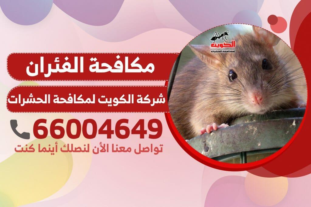 مكافحة الفئران | شركة الكويت لمكافحة الحشرات والقوارض