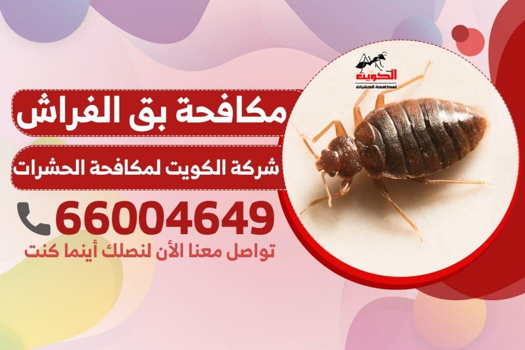مكافحة بق الفراش | شركة الكويت لمكافحة الحشرات